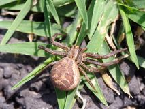 araignée dans le jardin arrière photos libres de droits
