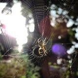 Araignée dans son Web Photos libres de droits