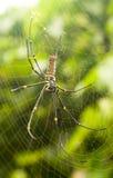 Araignée dans son Web Photos stock