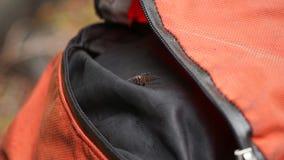 Araignée dans un sac à dos sur la traînée du pays des merveilles, Canada photo stock