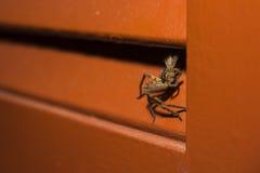 Araignée de chasse menaçant dans l'ombre 3 Image stock