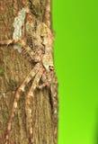 Araignée de chasseur Photographie stock libre de droits