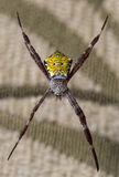 Araignée de jardin hawaïenne Images libres de droits