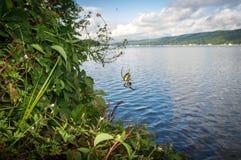 Araignée de jardin jaune Photo libre de droits