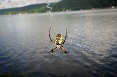 Araignée de jardin jaune Photographie stock libre de droits