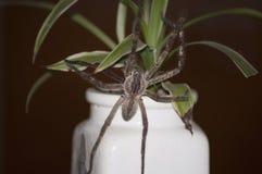 Araignée de pluie photo stock