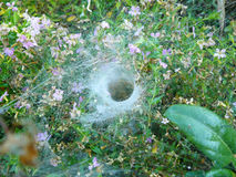 araignée de tissage d'herbe d'entonnoir Images libres de droits