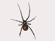 Araignée de veuve noire de vecteur illustration de vecteur