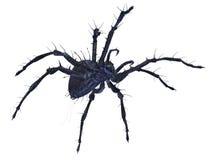 Araignée effrayante Photo libre de droits