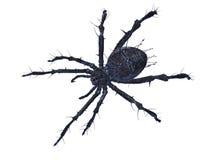 Araignée effrayante Photographie stock
