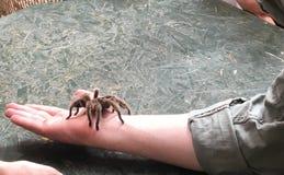 araignée en main Image stock