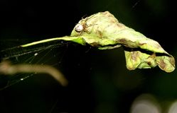 Araignée en nature Photo stock