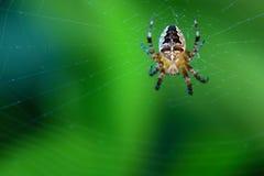 Araignée en travers sur le Web image stock