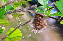 Araignée et chéris Images stock
