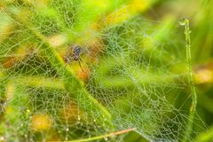 Araignée et rosée photo stock