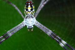 Araignée et toile d'araignée Photo stock