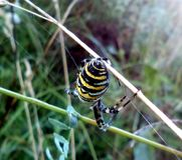 Araignée et toile d'araignée Image stock