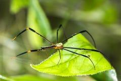 Araignée et toile d'araignée sur la feuille verte dans la forêt Photo stock