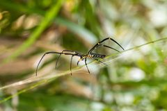 Araignée et toile d'araignée sur la feuille verte dans la forêt Photos libres de droits