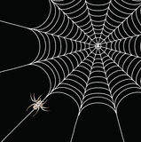 Araignée et un Web illustration stock