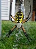 Araignée et Web Photographie stock libre de droits