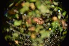 Araignée et x27 ; Web de s image libre de droits