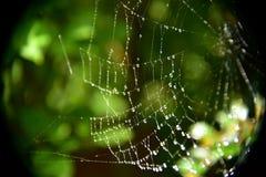 Araignée et x27 ; Web de s image stock