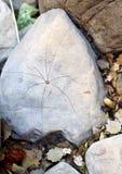 Araignée gigantesque se reposant sur la roche photos libres de droits