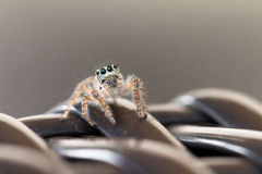 Araignée grise photos stock