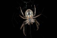 araignée Macro Image stock
