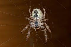 araignée Macro Image libre de droits