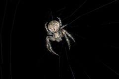 araignée Macro Photo stock