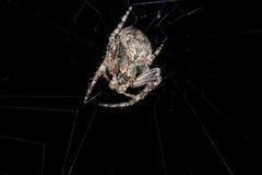 araignée Macro Images libres de droits