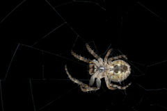 araignée Macro Photos libres de droits
