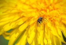 Araignée mignonne Photo libre de droits