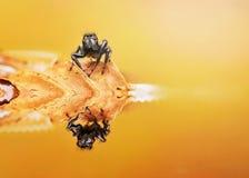 Araignée, nature d'insecte, naturelle, art Photos stock