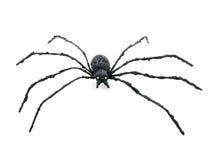 araignée noire Image stock