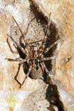 Araignée passant sur une pierre Photographie stock