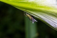 Araignée petite Photo libre de droits
