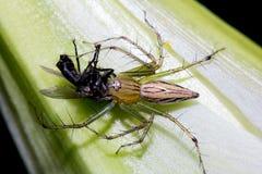 Araignée petite Photo stock