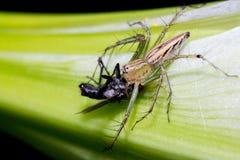 Araignée petite Image stock