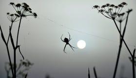 Araignée rétro-éclairée à l'aube Photos stock