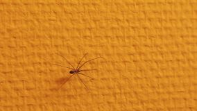 Araignée rampant sur le mur banque de vidéos