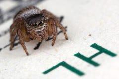 Araignée sautante et cent dollars photographie stock