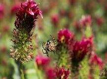 Araignée se reposant sur son Web, proie de attente pour manger Photographie stock