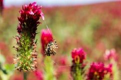 Araignée se reposant sur son Web, proie de attente pour manger Photographie stock libre de droits