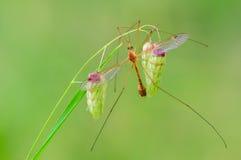 Araignée se reposant sur une fleur sèche Photos libres de droits