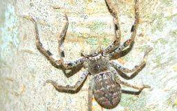 Araignée sur l'arbre Image stock