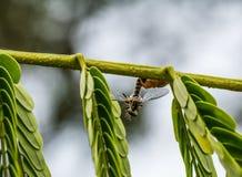 Araignée sur la feuille Photos stock