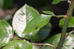 Araignée sur la feuille Image stock